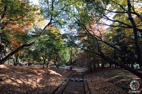 20111125-3.jpg